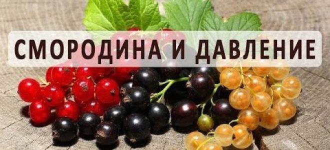 Рецепты приготовления черной смородины для понижения и повышения АД