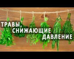 Сборы и настои из растений для снижения давления