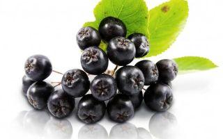 Влияние черноплодной рябины на артериальное давление