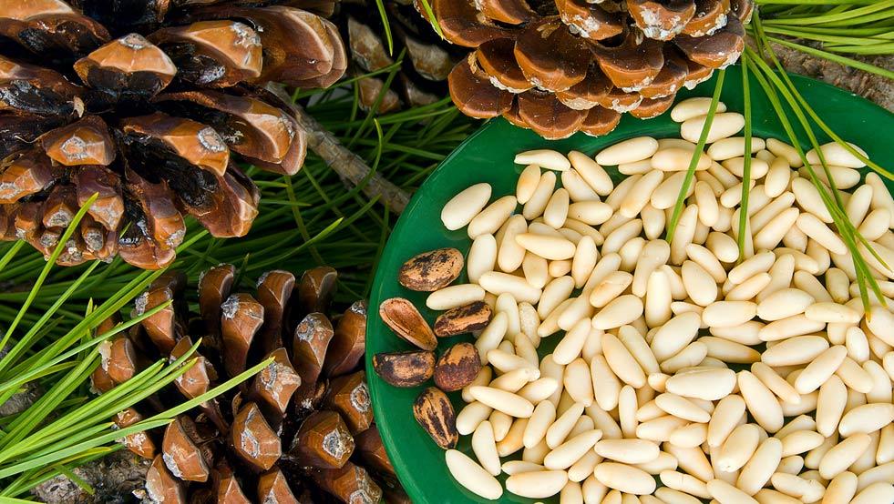 Кедровый орех