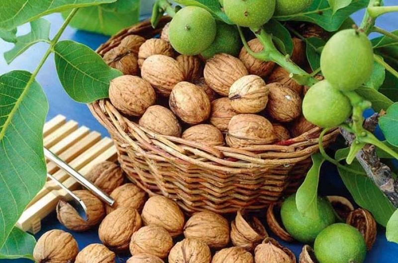Орехи грецкие повышают или понижают давление — Давление и всё о нём