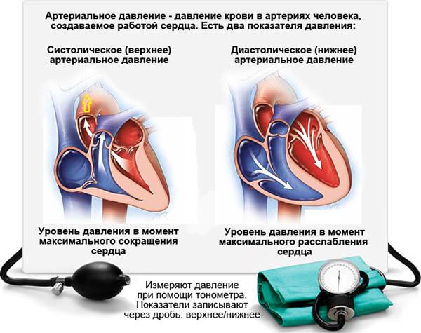 Что такое систолическое и диастолическое артериальное давление