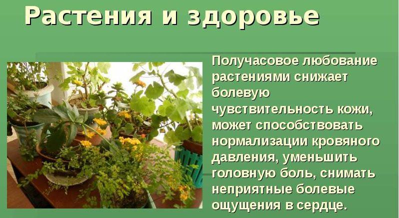 Растения снижают АД